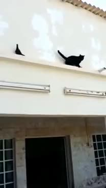 Watch Pigeon outsmarts  cat GIF on Gfycat. Discover more All Tags, Outdoors, animal, animals, bird, birds, cat, funny, hunt, hunting, pets, pigeon GIFs on Gfycat