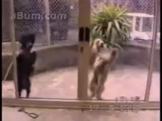 Watch and share Dancing Dogs GIFs on Gfycat
