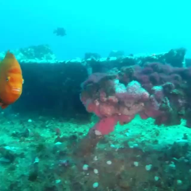 MarineBiologyGifs, marinebiologygifs, Untitled GIFs