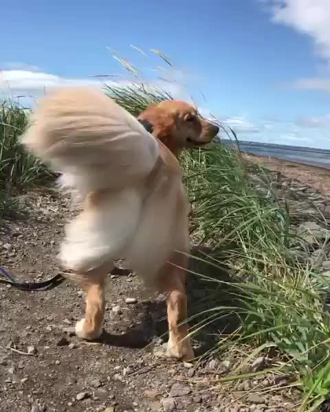 Watch and share Golden Retrievers GIFs by vani  on Gfycat