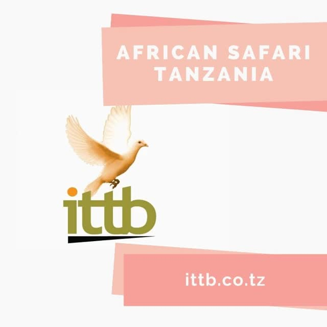 Watch and share African Safari Tanzania GIFs by imaginetanzania on Gfycat