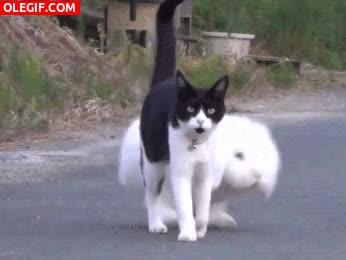 Watch and share GIF: Conejo Caminando Junto A Su Amigo Gatuno GIFs on Gfycat