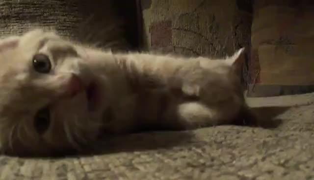 Kittens, Kittens GIFs