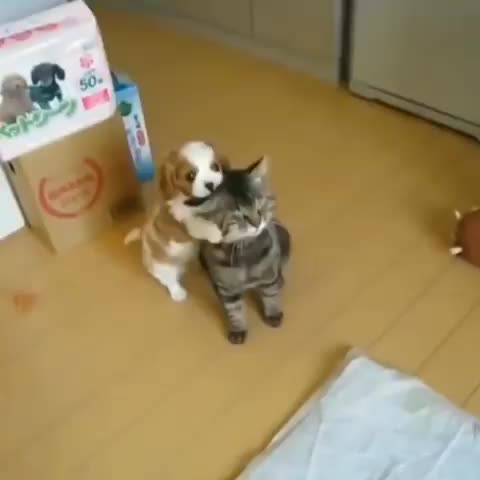 Watch and share Cutestpuppy GIFs and Puppydaily GIFs on Gfycat