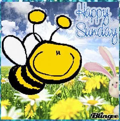 Watch and share Sunday Sunday Sunday GIFs on Gfycat