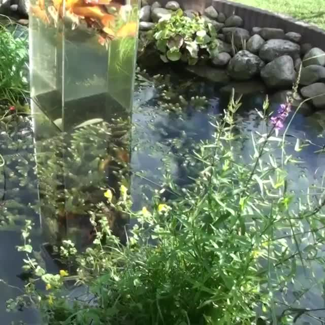 vertical koi pond feature GIFs