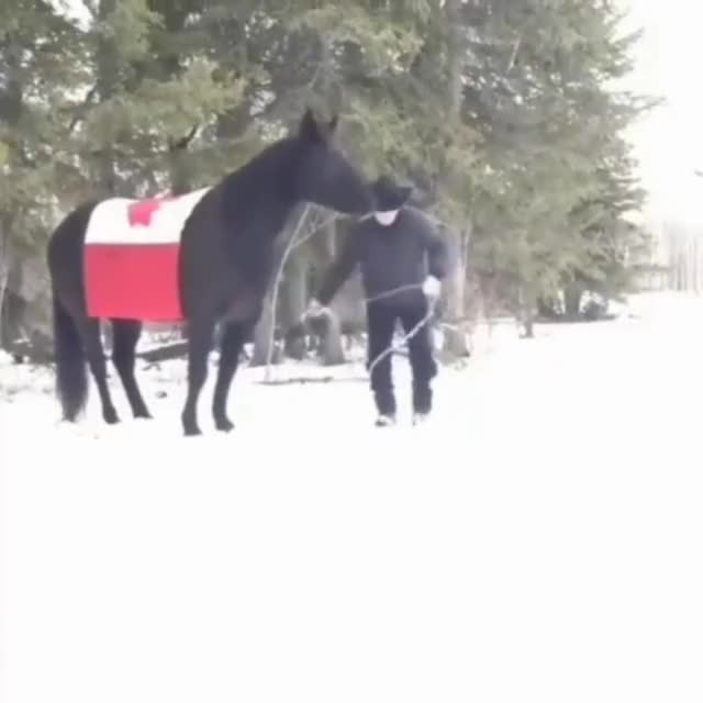 Watch and share Horse GIFs by gretta on Gfycat