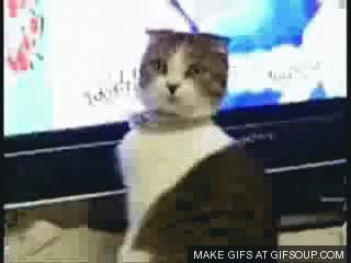 Watch and share Surprised Kitty GIFs on Gfycat