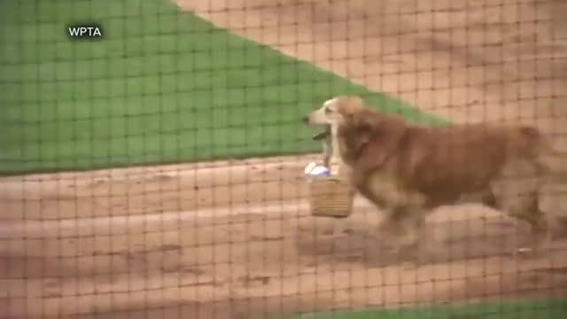 Watch and share Baseball GIFs and Dog GIFs by tothetenthpower on Gfycat