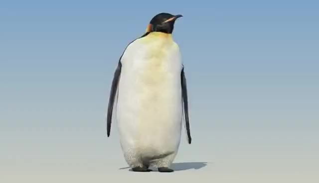 Watch and share Penguin Walk Cycle Animation GIFs on Gfycat