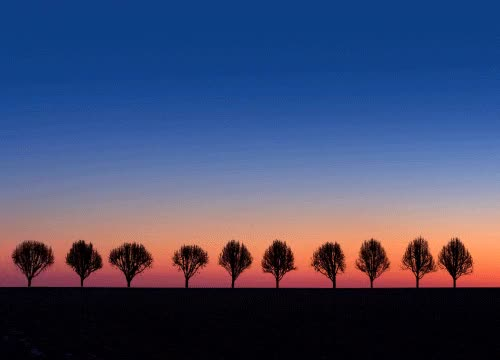 Watch and share Coucher De Soleil, Lever De Soleil, Arbres GIFs on Gfycat