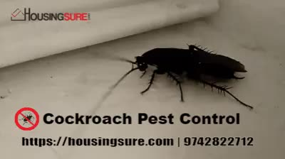 Watch and share Housingsure GIFs and Pestcontrol GIFs by PCB Pest Control on Gfycat
