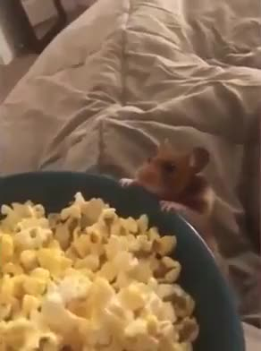 Watch and share more GIFs by notmyproblem on Gfycat