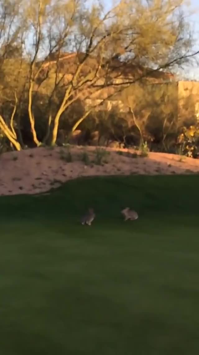 Watch Bunnies Have Hopping Fight on Golf Course | Epic Fights GIF on Gfycat. Discover more daily, daily picks, rocketleague GIFs on Gfycat