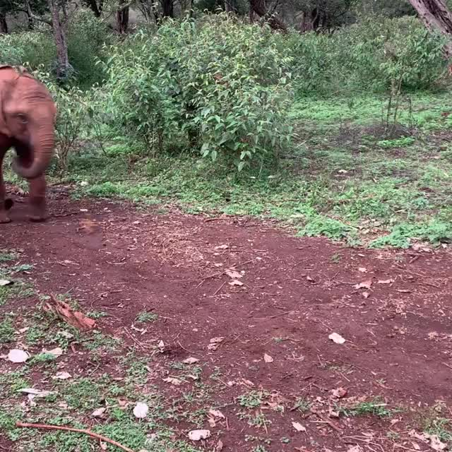 Watch and share Elephants GIFs and Animals GIFs by vani  on Gfycat