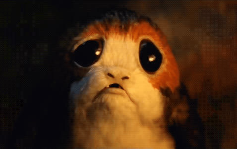 crying, disappointed, emotional, feels, lip quivering, porg, sad, star wars, star wars the last jedi, the last jedi, Star Wars: The Last Jedi - Sad Porg GIFs