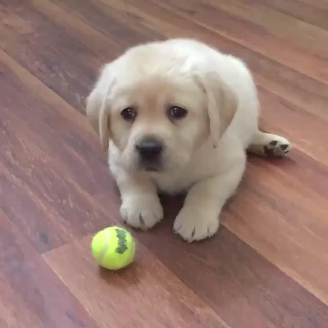 dog, Bolt_meets_world GIFs