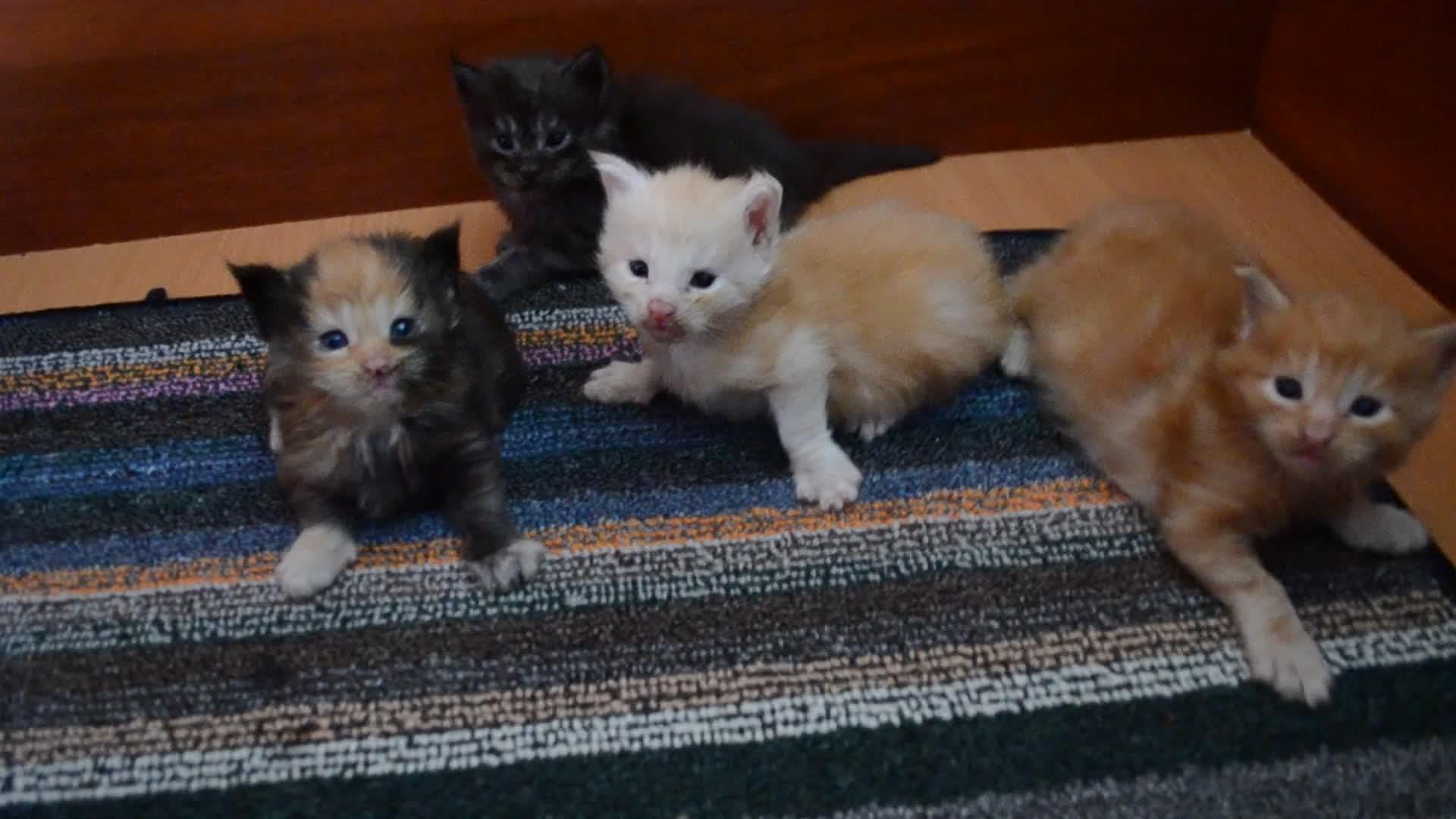 Cute kittens, dog, Cute kittens GIFs