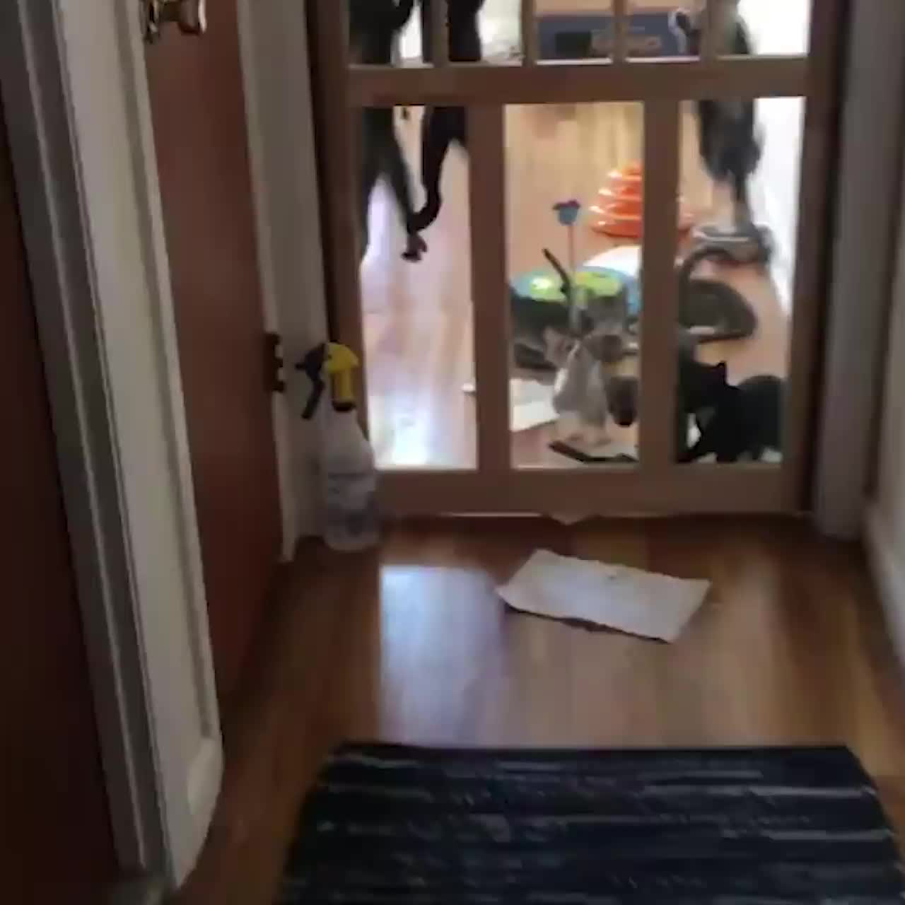 Kittens Climbing Up Door In The Morning GIFs