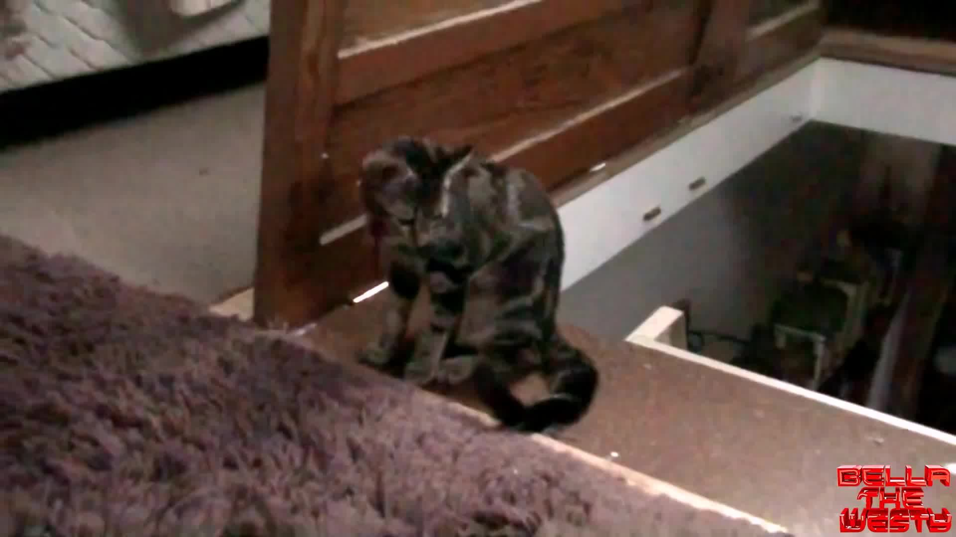 cat, hitmanimals, Hitcat makes it look like an accident GIFs