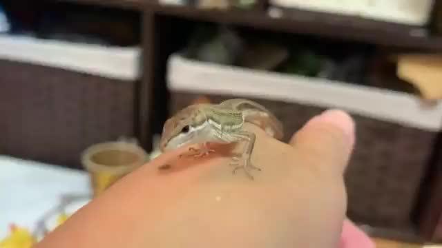 Watch and share Lizard GIFs and Mole GIFs by 1monkeyshort on Gfycat