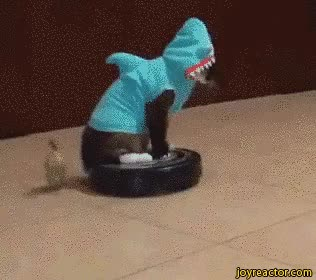 Watch and share Cat Shark Cosplay Vacuum Cleaner GIFs on Gfycat