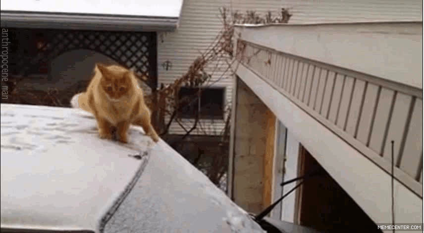 cat, grumpy, grumpy cat, Grumpy Jedi | Grumpy Cat GIFs