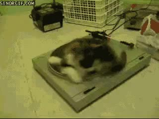 Watch and share Turntable GIFs on Gfycat