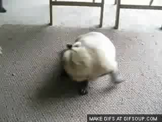 Watch they spinning GIF on Gfycat. Discover more funny GIFs on Gfycat