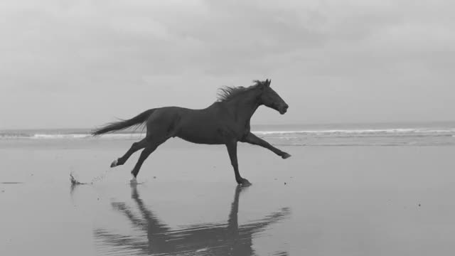 Watch The Horse GIF by Максим Владимирович Расторгуев (@maks2303) on Gfycat. Discover more related GIFs on Gfycat