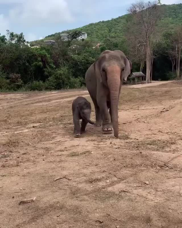 Watch and share Baby Elephant GIFs by fireboy99 on Gfycat