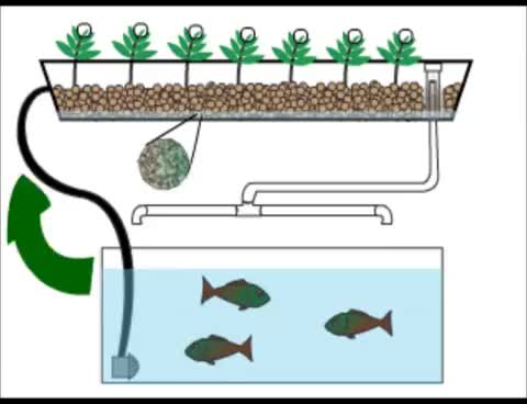 Watch and share Home Aquaponics- Quick Animation GIFs on Gfycat