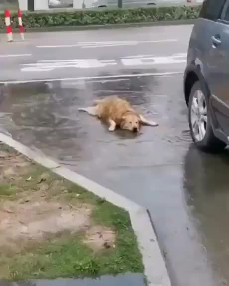 Watch and share Puddle GIFs and Fish GIFs on Gfycat