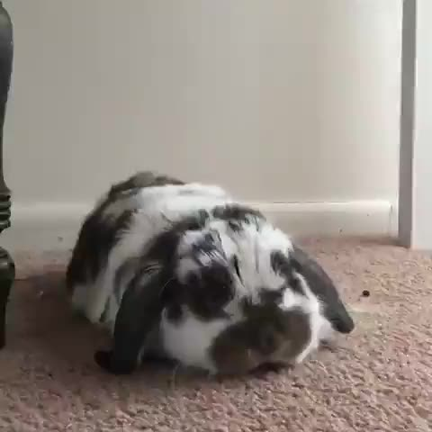Watch and share Rabbit GIFs and Bunny GIFs by cakejerry on Gfycat