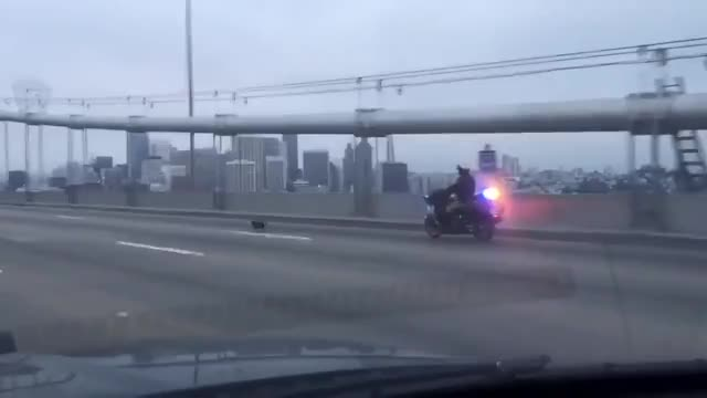 Watch and share Bay Bridge GIFs and Chihuahua GIFs by Reactions on Gfycat