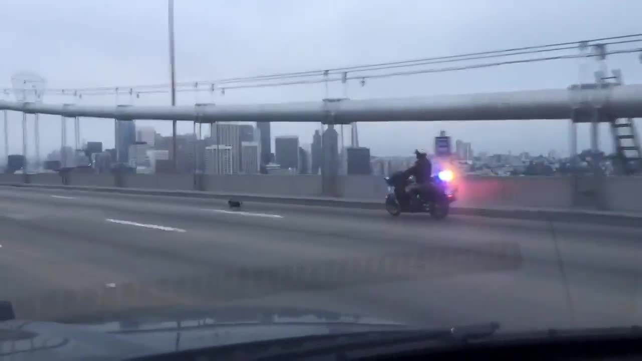 bay bridge, chihuahua, cops, HIGH SPEED PURSUIT... or is it? A chihuahua led CHP San Francisco on the Bay ... GIFs