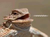 Watch and share Hehehehe Lizard GIFs on Gfycat