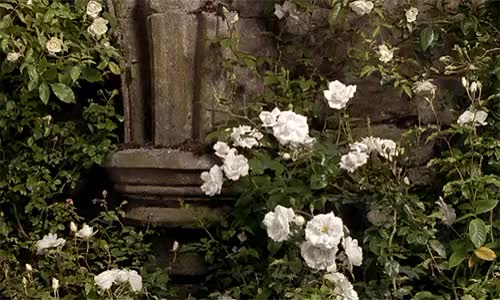 Watch this GIF on Gfycat. Discover more *gifs, 1990s, 1k*, Agnieszka Holland, The Secret Garden, flower garden, flowers, scenery GIFs on Gfycat