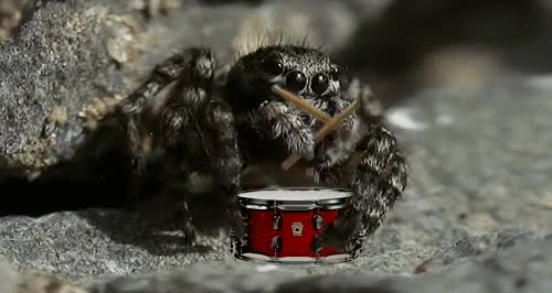 Watch and share Spiders GIFs on Gfycat