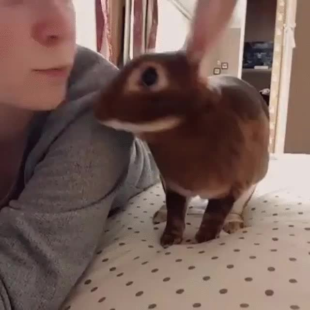 Watch and share Rabbit GIFs and Bunny GIFs by teistom on Gfycat