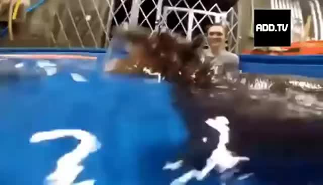 Baby Hippo Attacks and Bites Human! GIFs
