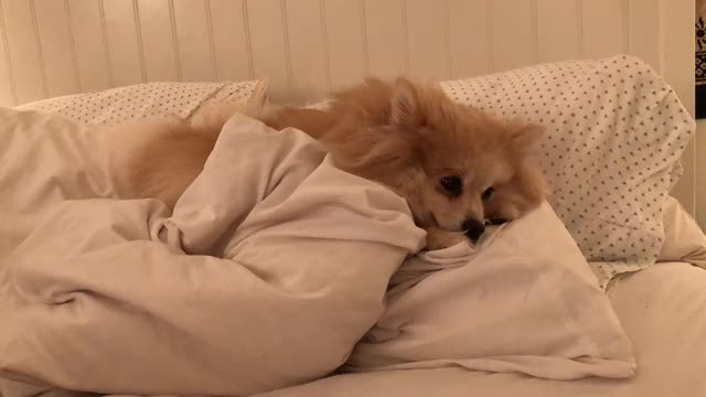 Watch this dog GIF by Emily Alexandra Smart (@easmart) on Gfycat. Discover more dog GIFs on Gfycat
