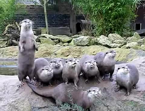 ububub, otters GIFs