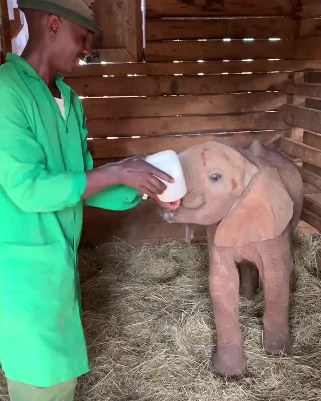 Watch and share Elephant GIFs and Rescue GIFs by vani  on Gfycat