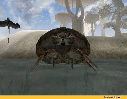 Watch and share TES Gif,The Elder Scrolls,фэндомы,Morrowind,похуй Пляшем GIFs on Gfycat