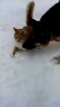 cat, dog, snow, Dog Pushes Cat's Face In Snow!