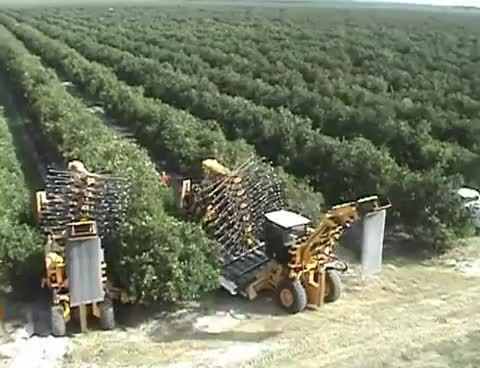 Watch and share Oxbo 3220 Citrus Harvester GIFs on Gfycat