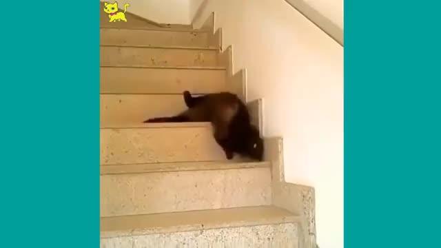 Watch Gatti pazzi ✪ Gatti divertenti ✪ Prova a non ridere 29 GIF on Gfycat. Discover more related GIFs on Gfycat