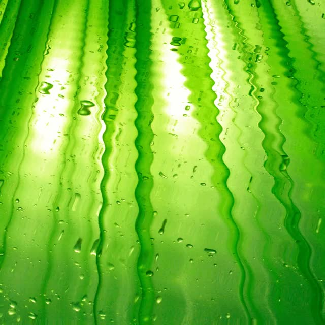 Watch and share WATERING GREEN RAIN DROPS By Aim4Beauty GIFs on Gfycat