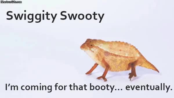 Watch and share Swiggity Swooty… | HilariousGifs.com GIFs on Gfycat